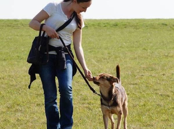 dressage chien 9 mois