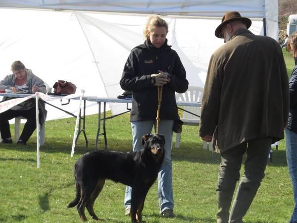 cout dressage chien aveugle