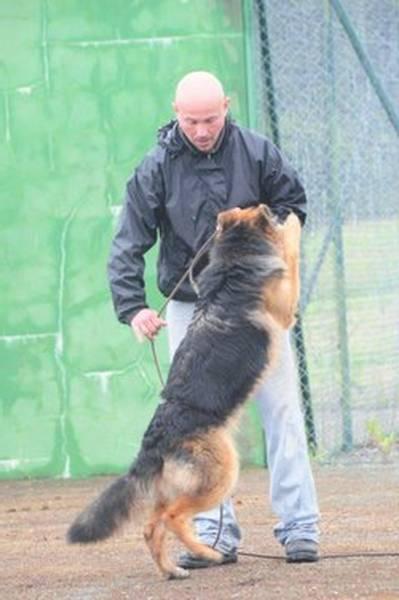 temps dressage chien aveugle
