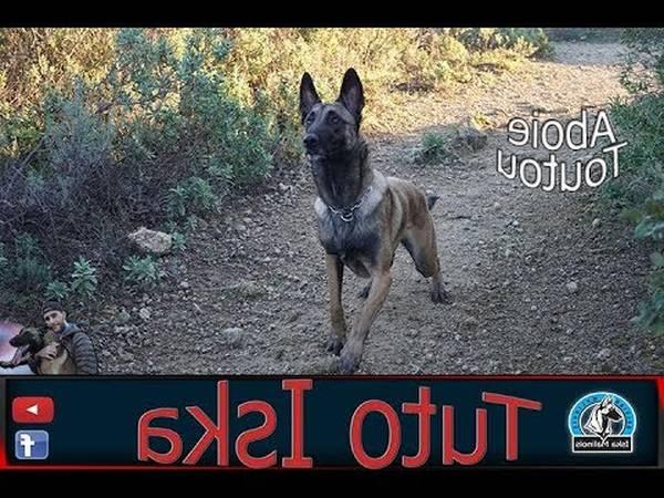 dressage chien montreal
