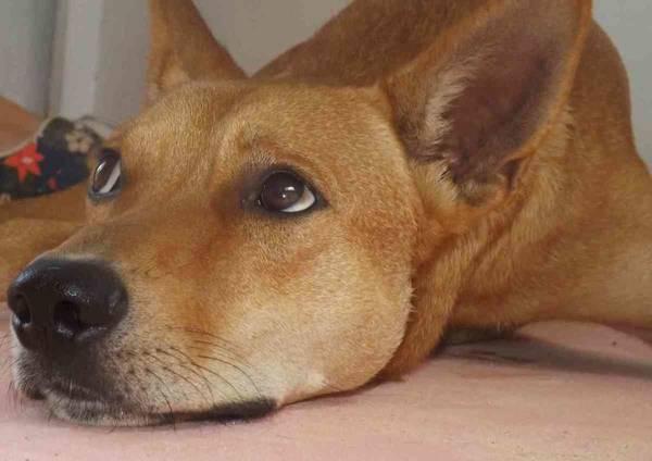ecole de dressage chien toulouse