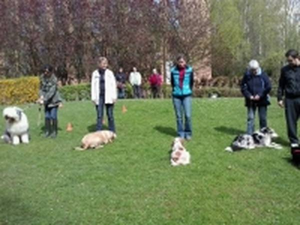video dressage chien chasse sanglier