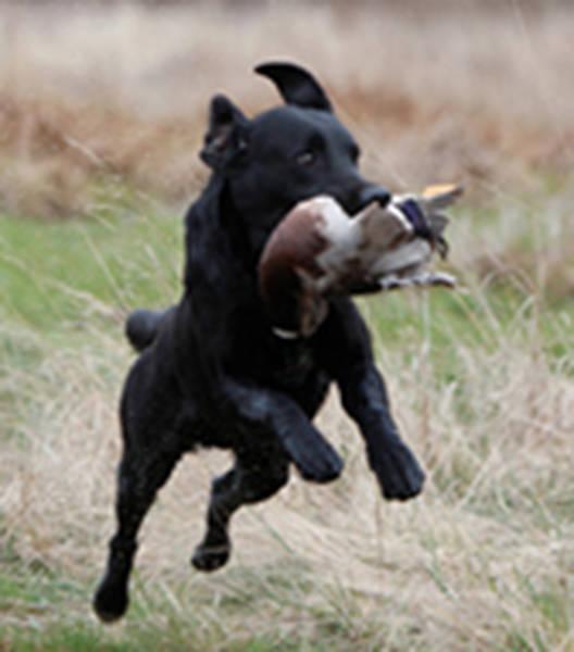dressage chien bouvent bourg en bresse