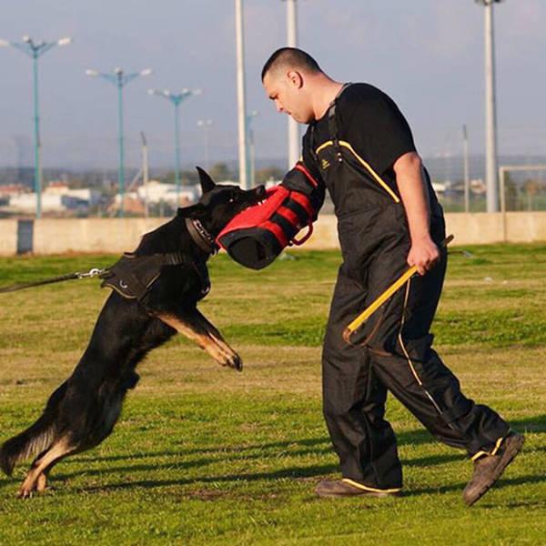 dressage chien haute marne