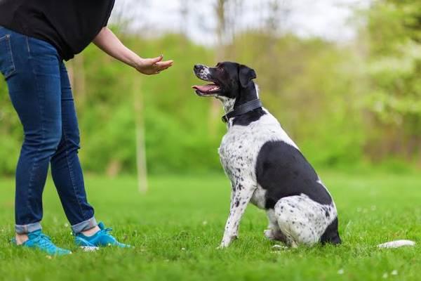 dressage chien sans laisse