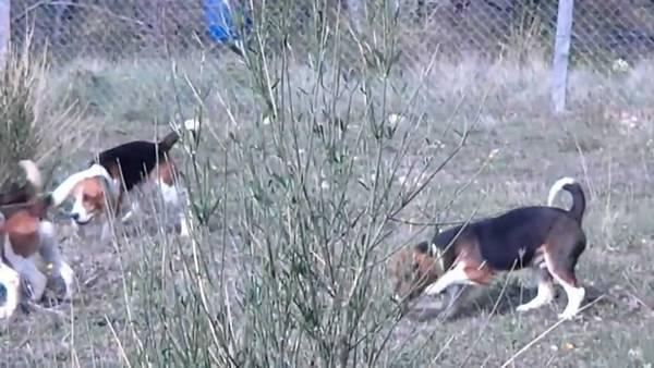 ecole dressage chien quebec