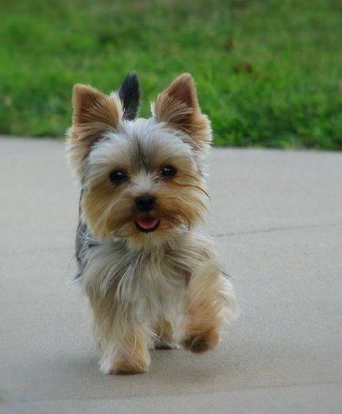 dressage chien mouscron