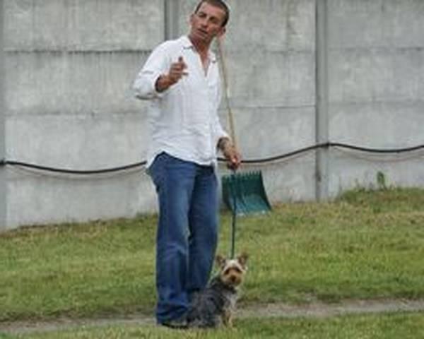 dressage chien wissembourg