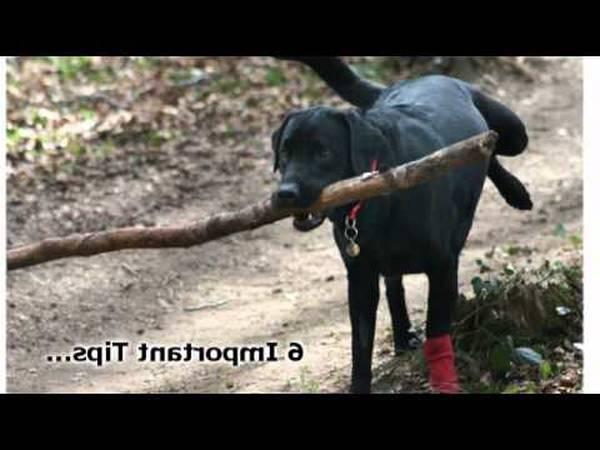 dressage canin uckange