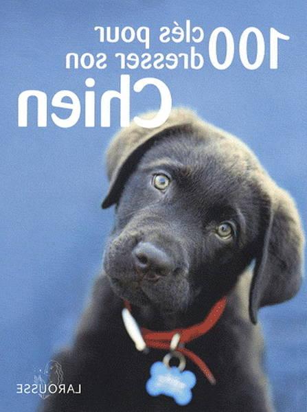 dressage chien police bruxelles