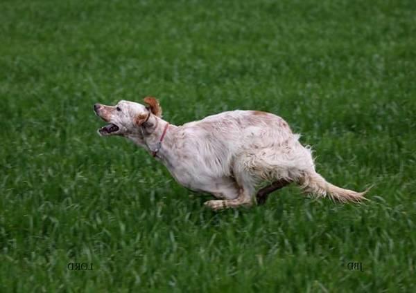 cours dressage chien agen