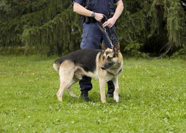 tarif dressage chien carcassonne