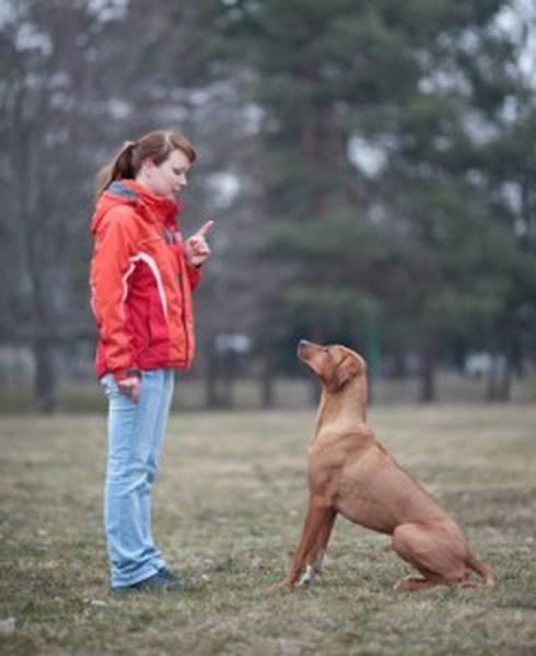 dressage de chien quel age