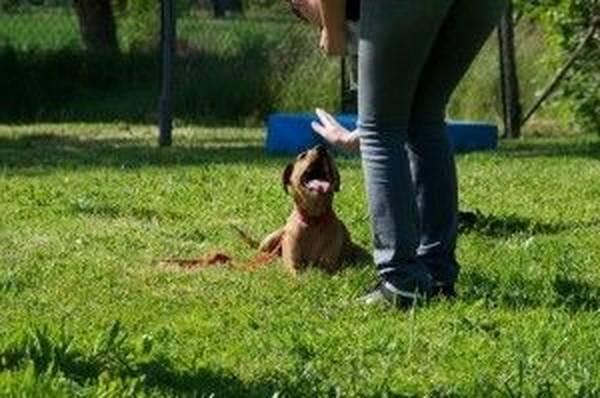 cours de dressage pour chien de garde