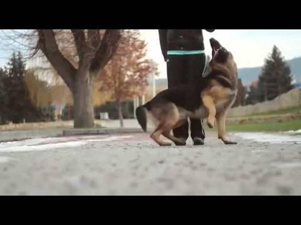 dressage chien 09