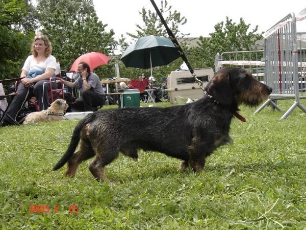 dressage chien jodoigne