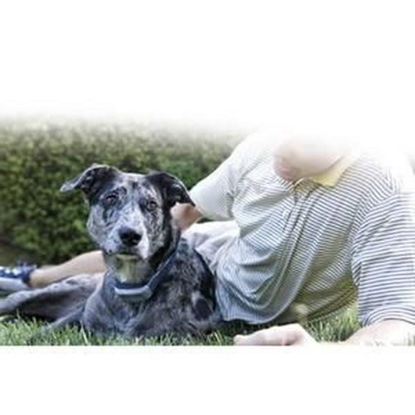 cours dressage chien age