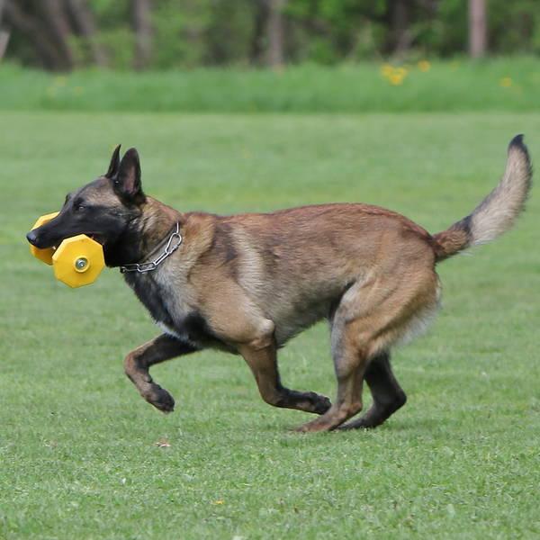 dressage chien limoges