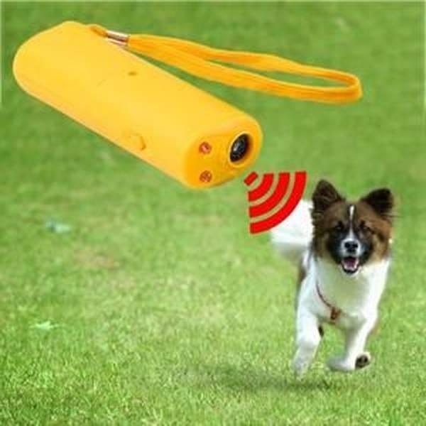 dressage chien chasse setter anglais
