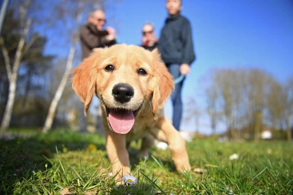 dressage chien morbihan