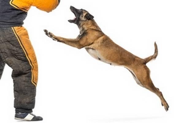 dressage chien 78100