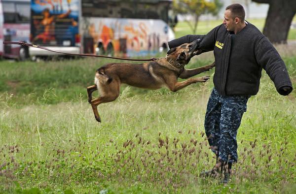 dressage chien 52