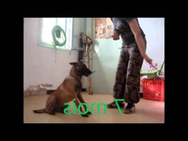 prix dressage chien castelnaudary