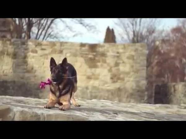 dressage chien orange 84