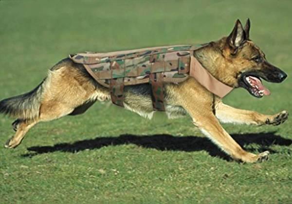 dressage chien braine lalleud