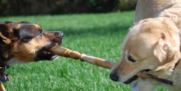 pension dressage chien ile de france