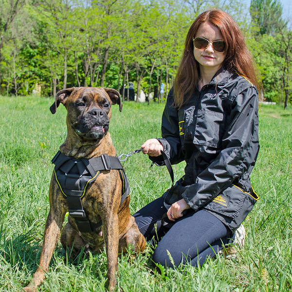 video dressage chien berger australien