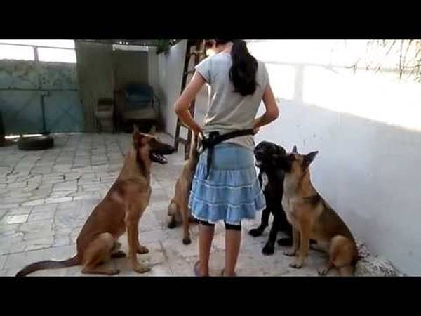dressage chien de chasse normandie