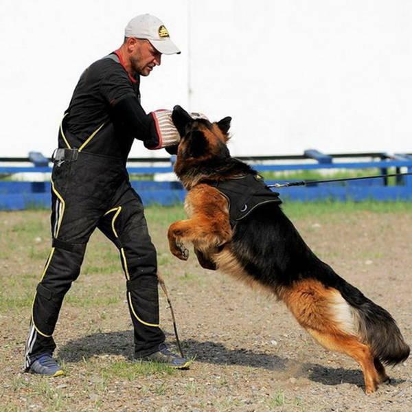 dressage chien ordre