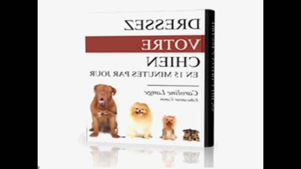 dressage chien verviers prix