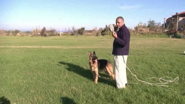dressage chien chasse beagle