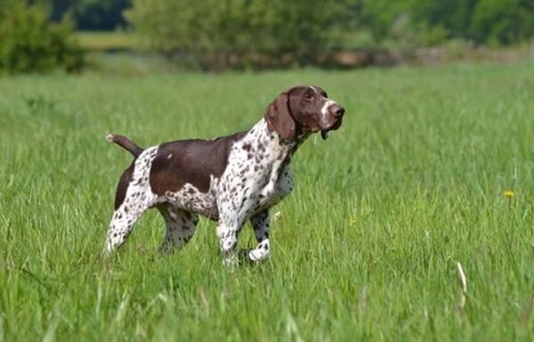 prix dressage chien haguenau