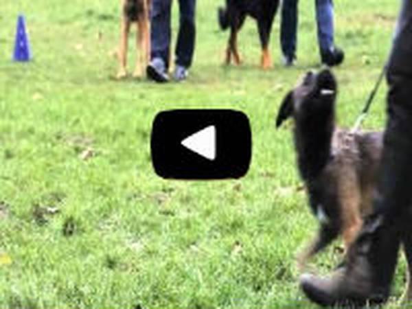 tarif dressage chien brignoles