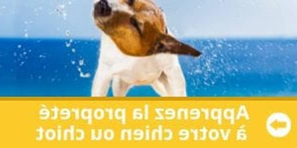dressage chien 61