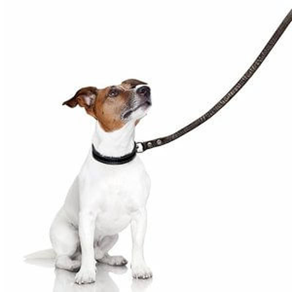 dressage chien a bruxelles