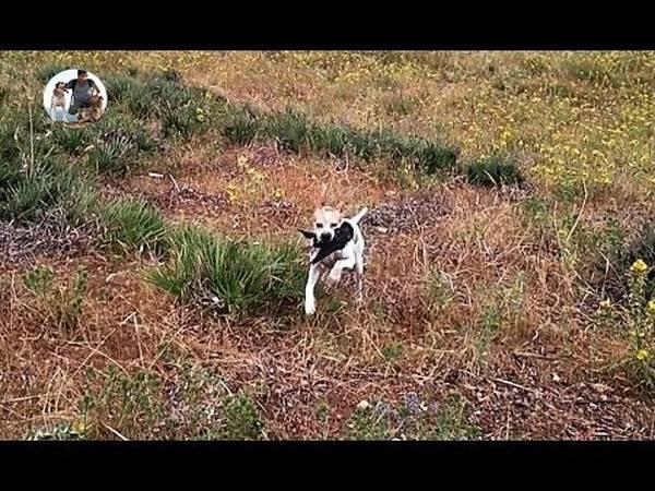 exercice dressage chien de chasse
