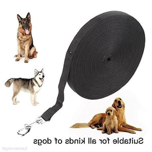 cours dressage chien québec