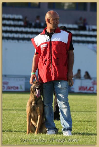 dressage chien québec