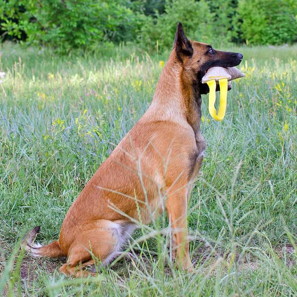 collier de dressage chien de chasse occasion