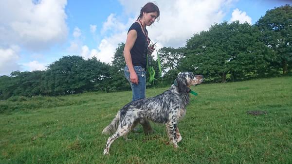 dressage chien de chasse braque allemand