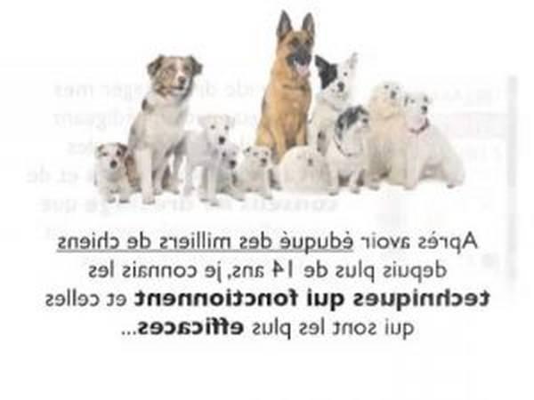 dresser chien guide aveugle