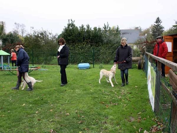 dressage chien de troupeau beauceron