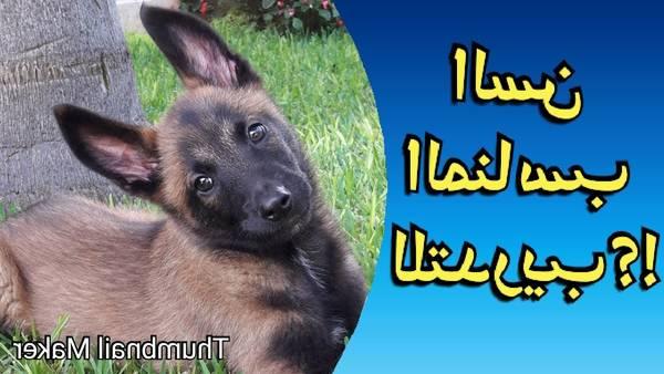 dressage chien vielsalm