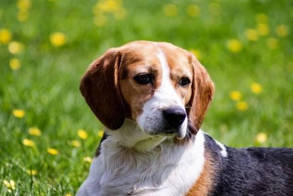 dressage chien renforcement positif